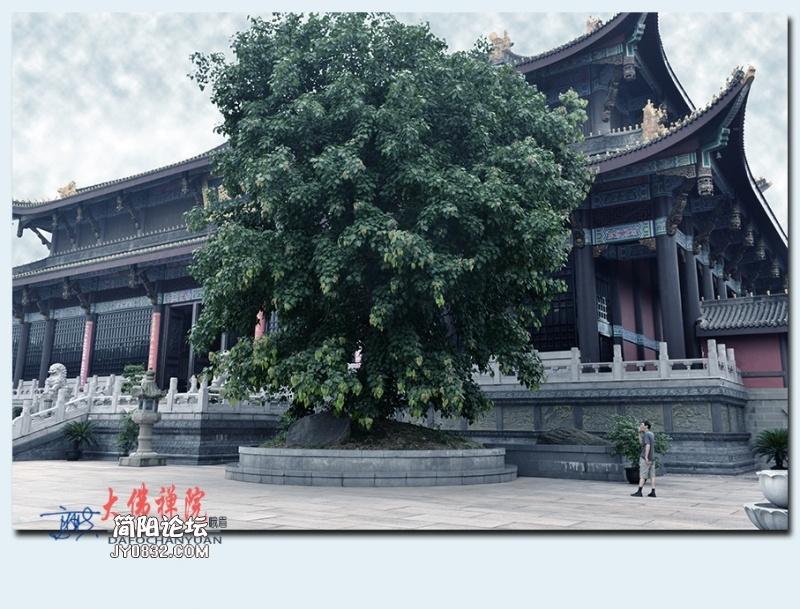 大佛禅院——04.jpg