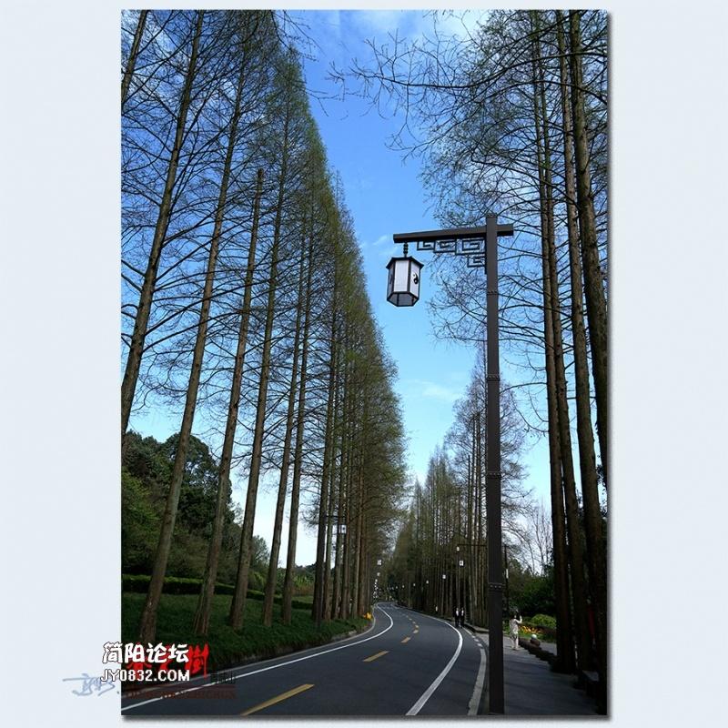 青城之树——01.jpg