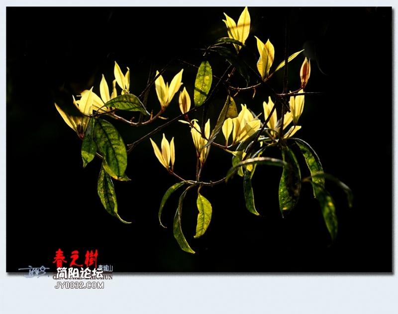青城之树——02.jpg
