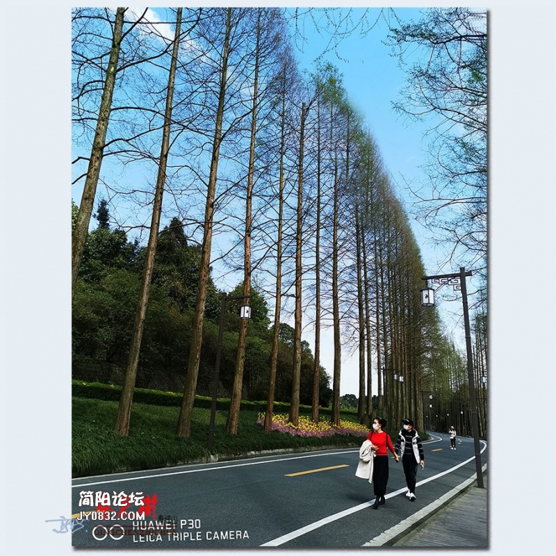 青城之树——03.jpg