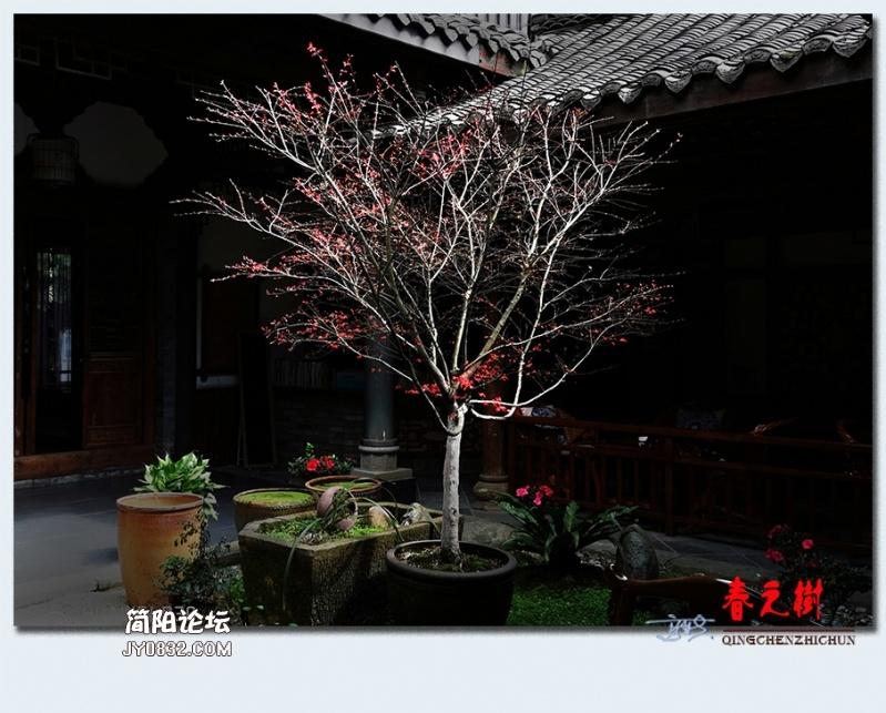 青城之树——06.jpg