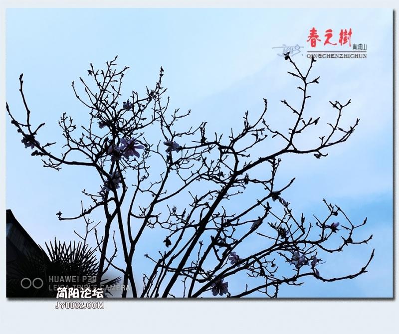 青城之树——07.jpg