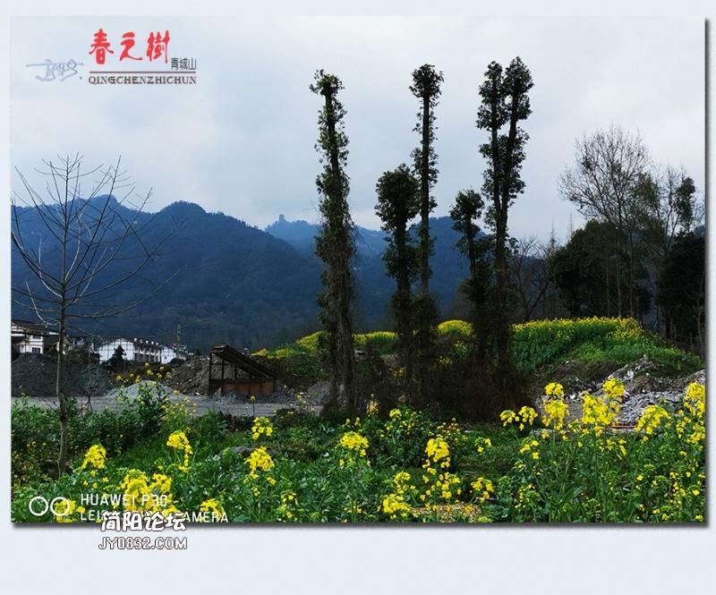 青城之树——08.jpg