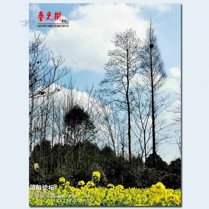 青城之树——09.jpg