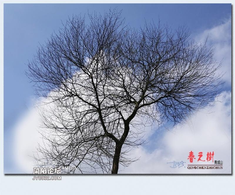 青城之树——10.jpg