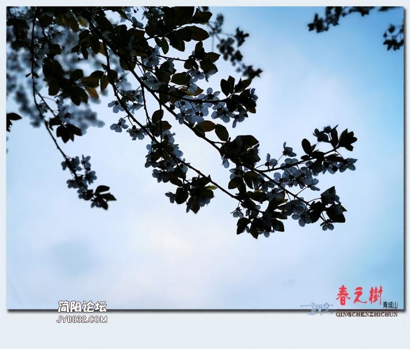 青城之树——14.jpg