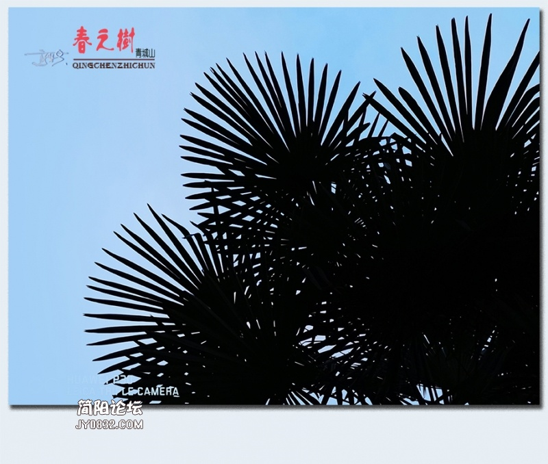 青城之树——13.jpg