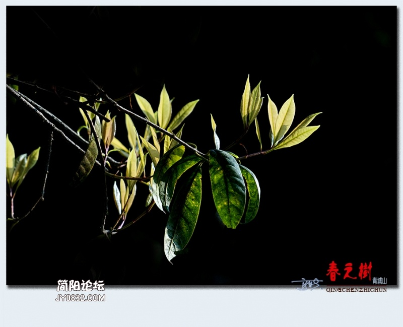 青城之树——15.jpg