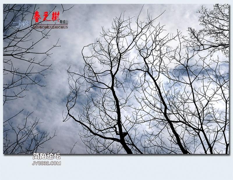青城之树——17.jpg