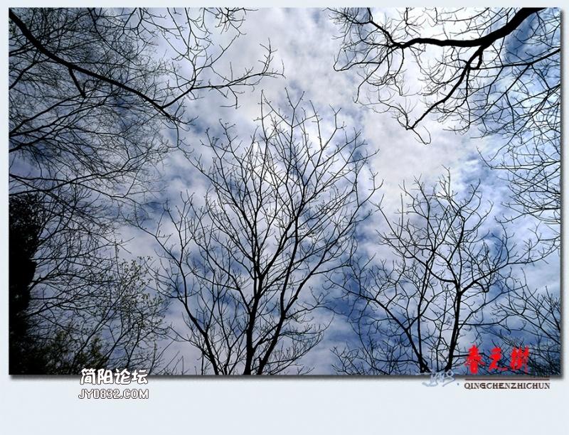 青城之树——16.jpg