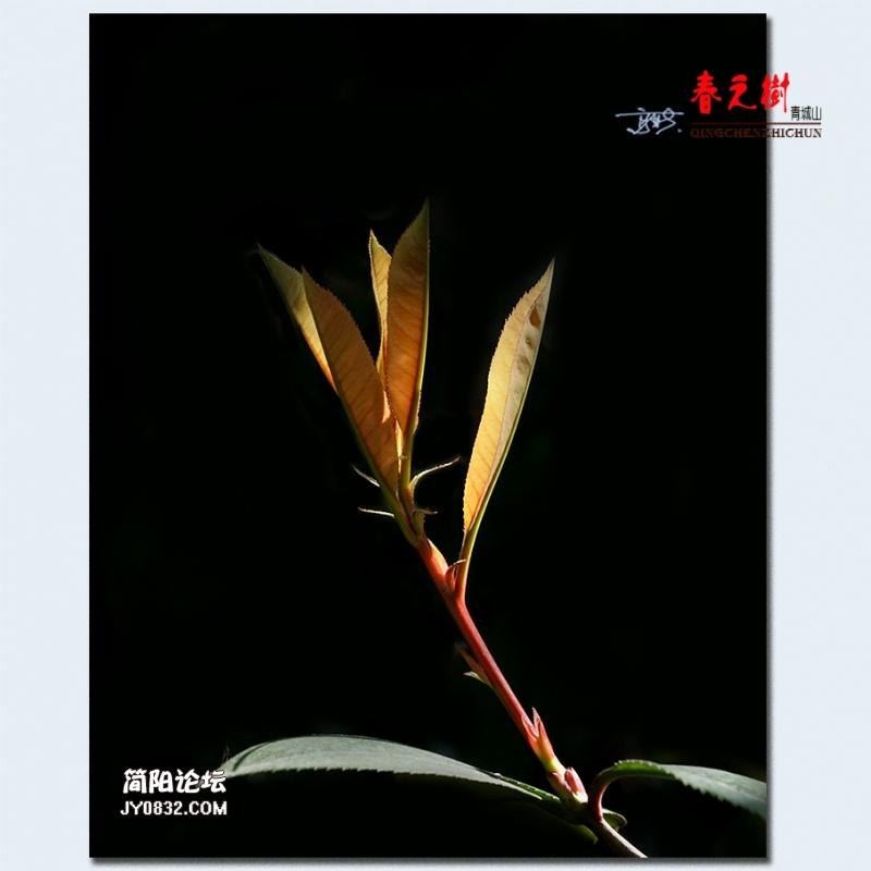 青城之树——19.jpg