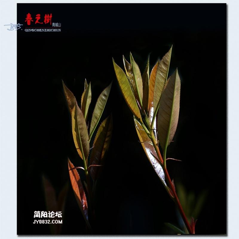 青城之树——21.jpg