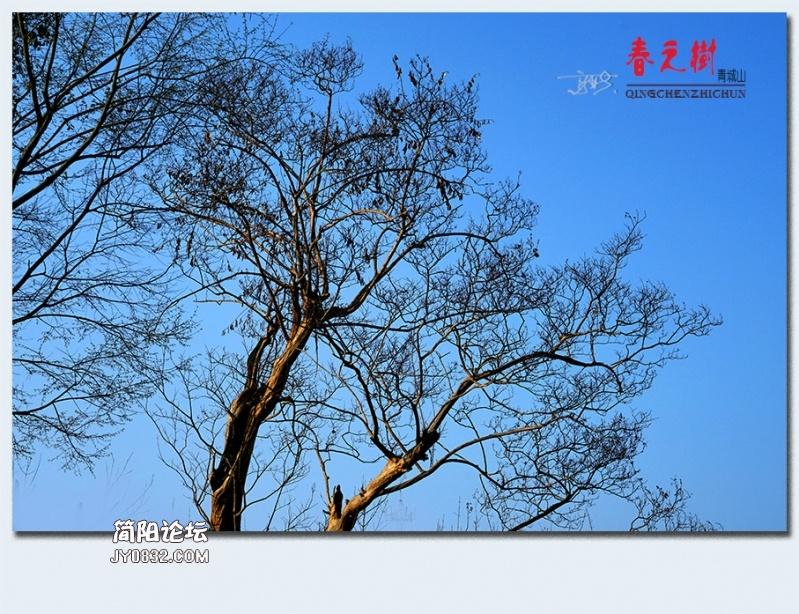 青城之树——20.jpg