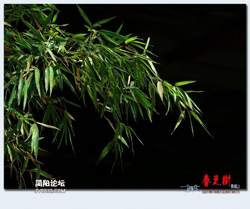 青城之树——22.jpg