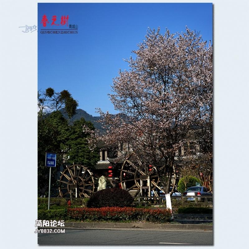 青城之树——23.jpg