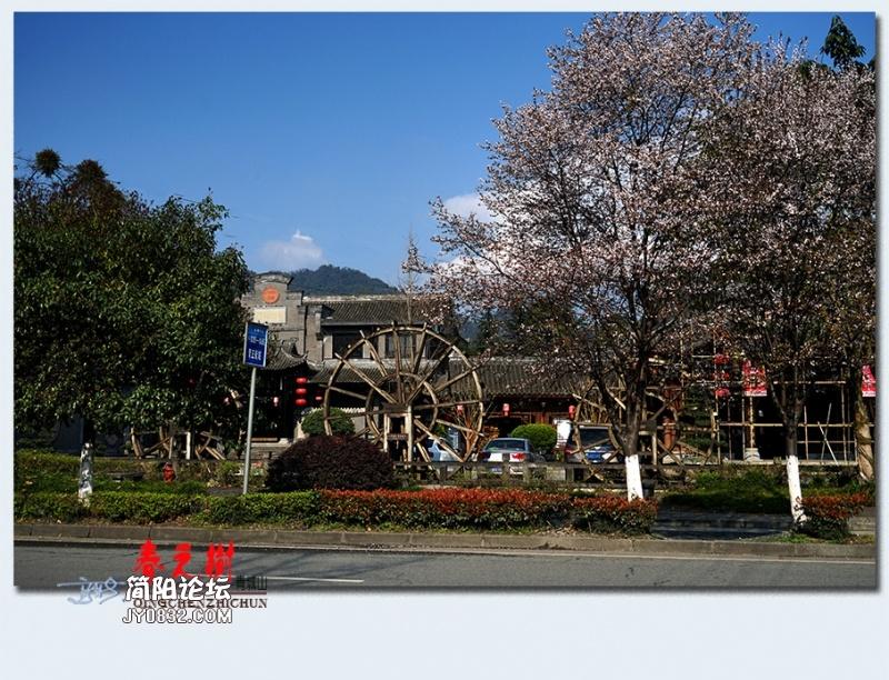 青城之树——24.jpg