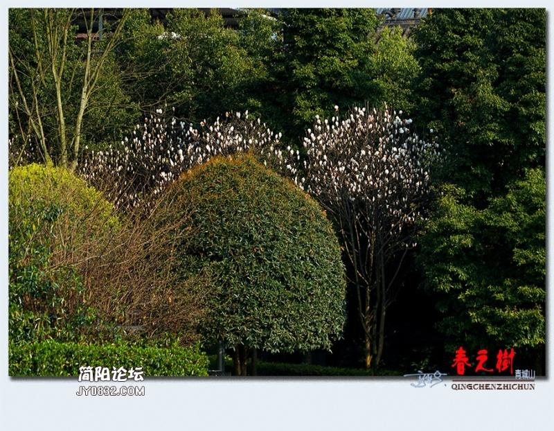 青城之树——26.jpg