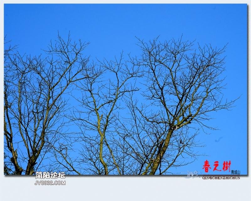 青城之树——27.jpg