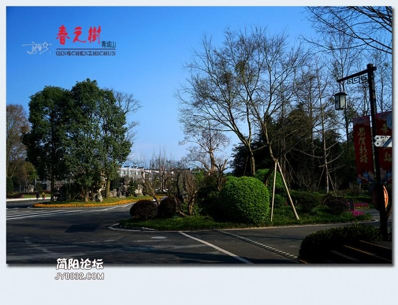 青城之树——28.jpg