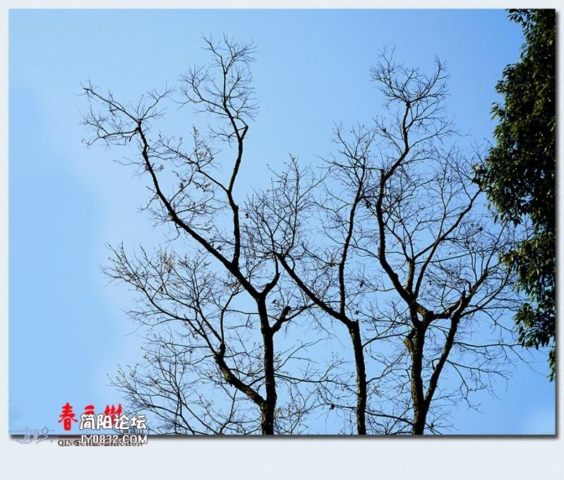 青城之树——30.jpg
