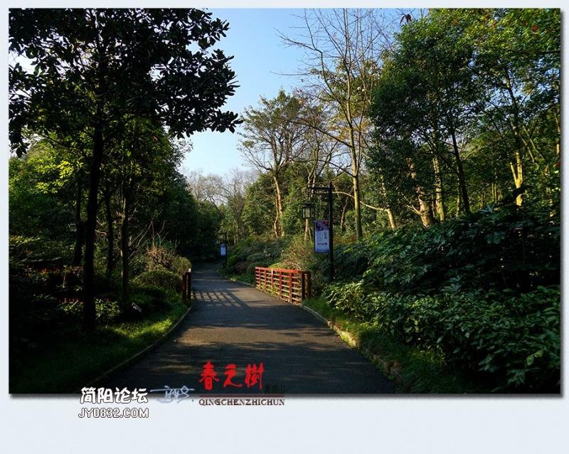青城之树——31.jpg