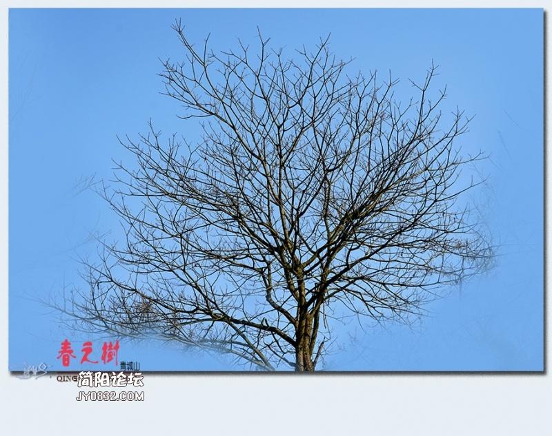 青城之树——33.jpg