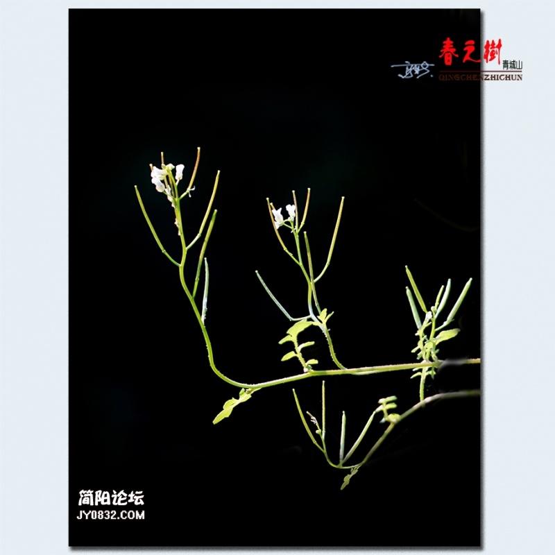 青城之树——34.jpg