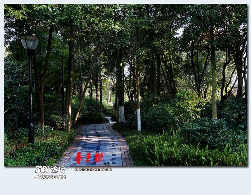 青城之树——36.jpg