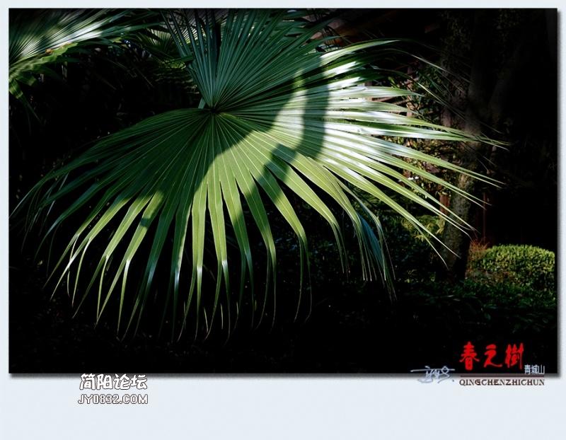 青城之树——38.jpg