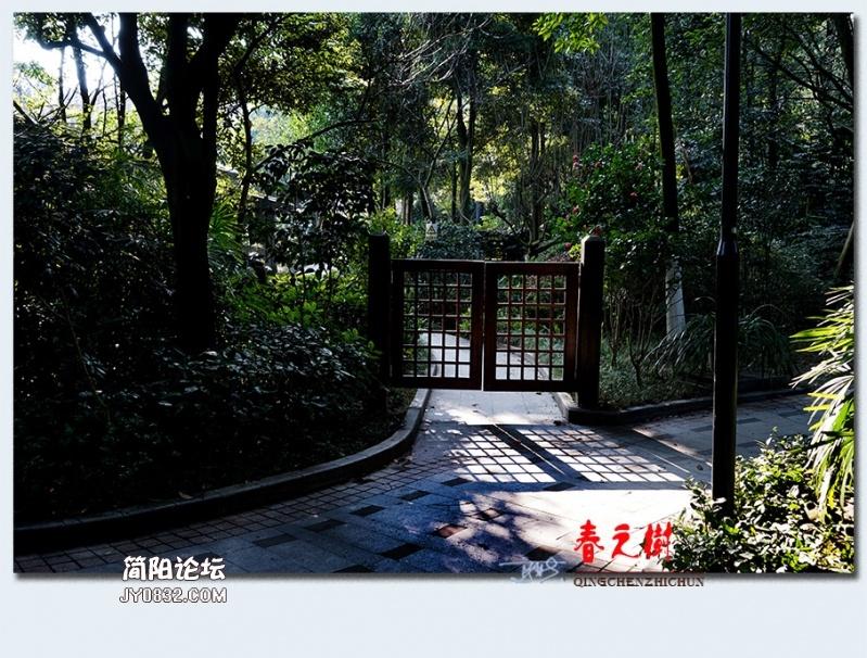 青城之树——37.jpg