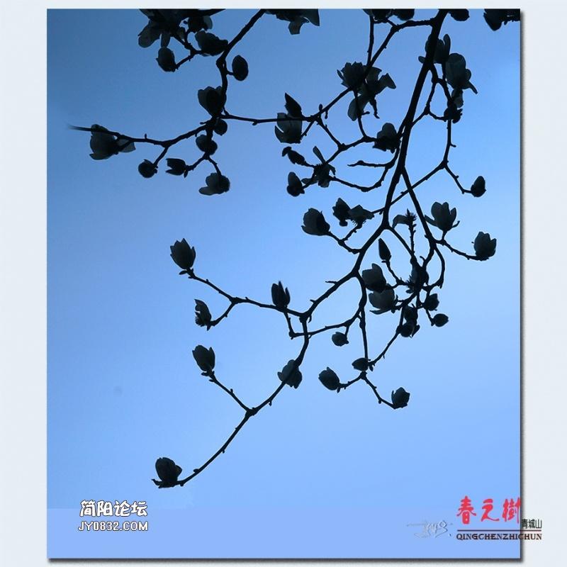 青城之树——39.jpg