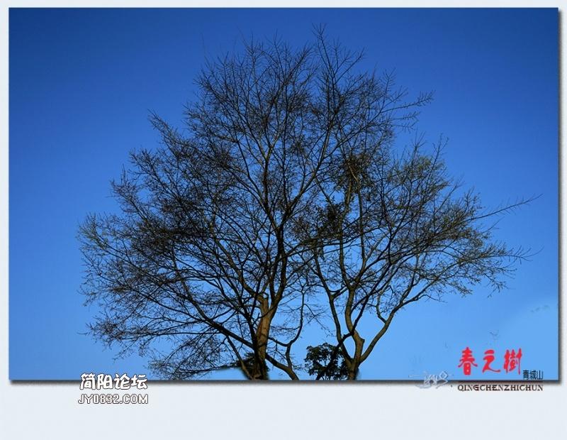 青城之树——41.jpg