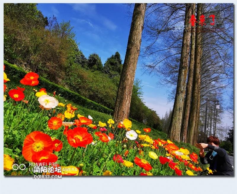 青城之春——01.jpg