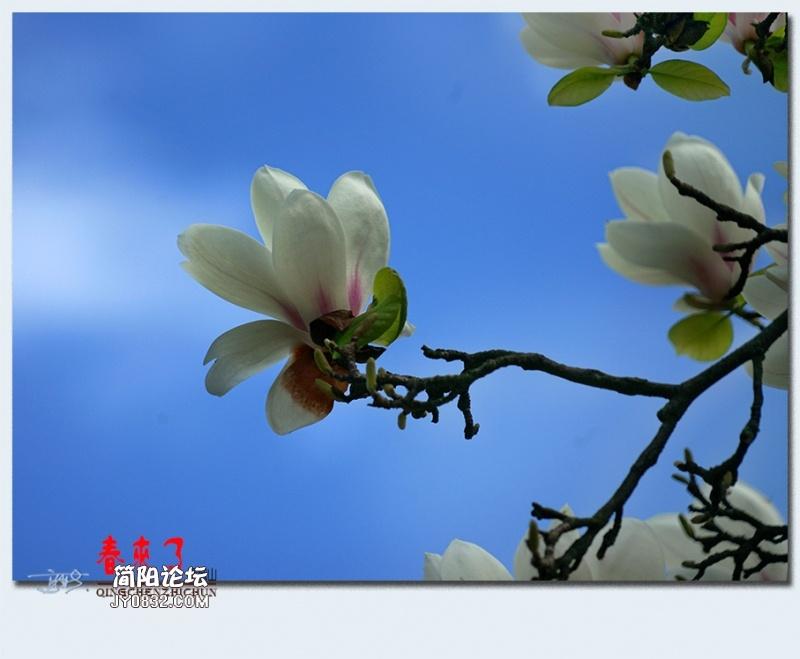 青城之春——05.jpg