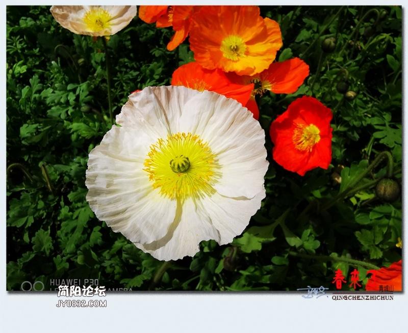 青城之春——06.jpg
