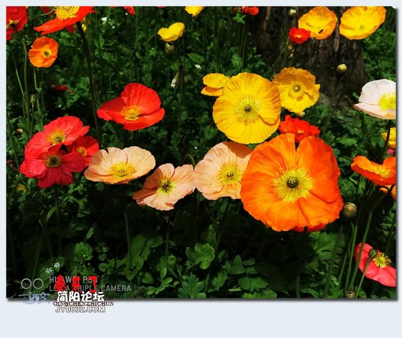 青城之春——10.jpg
