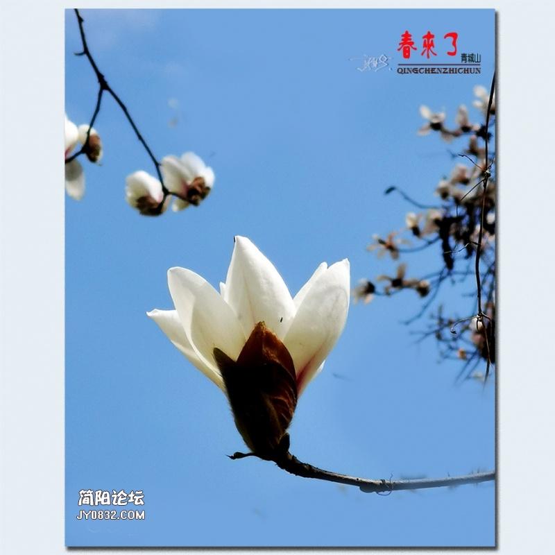 青城之春——19.jpg