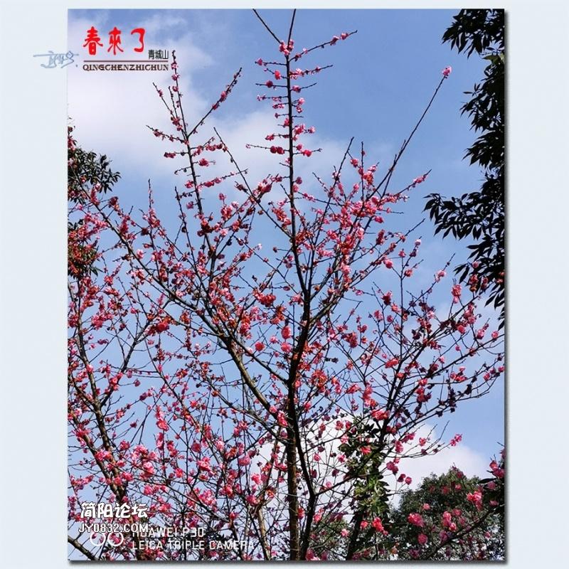 青城之春——20.jpg
