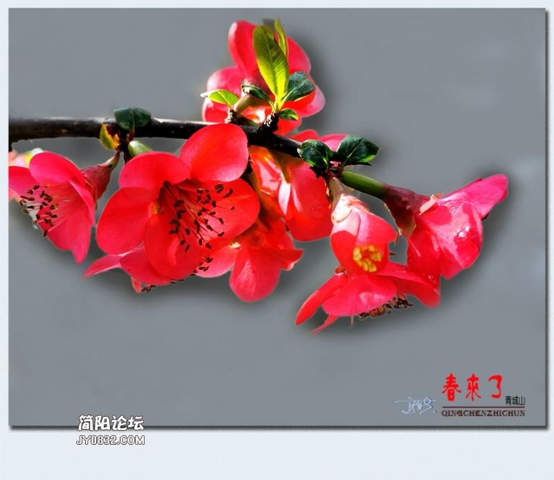 青城之春——21.jpg