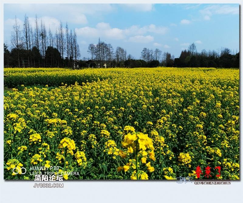 青城之春——22.jpg