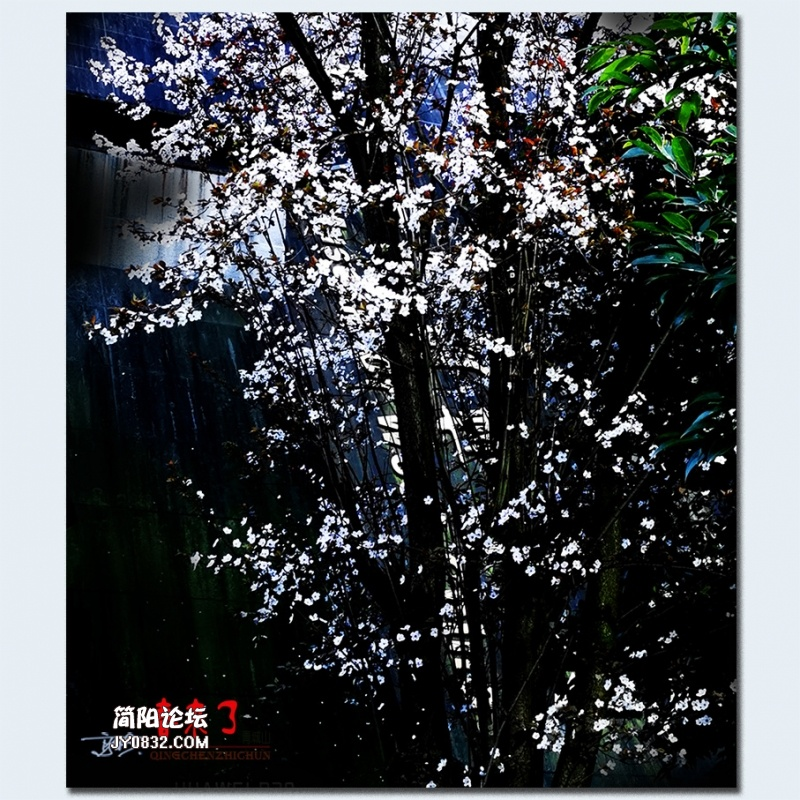 青城之春——25.jpg
