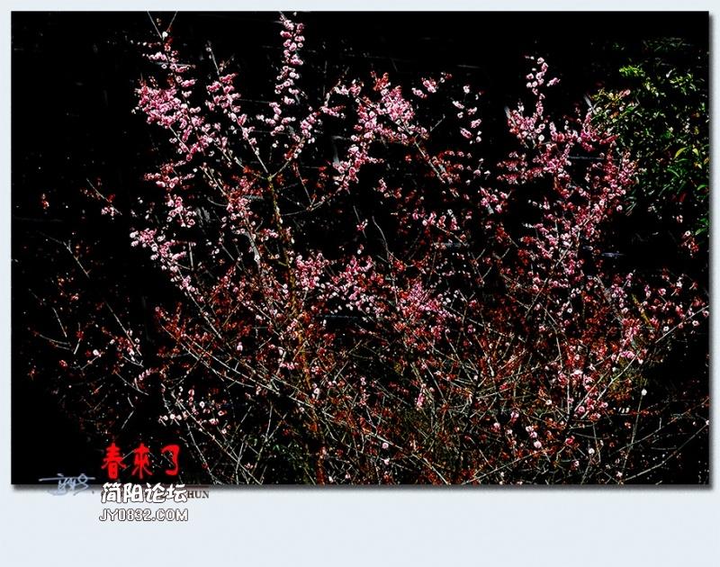 青城之春——29.jpg