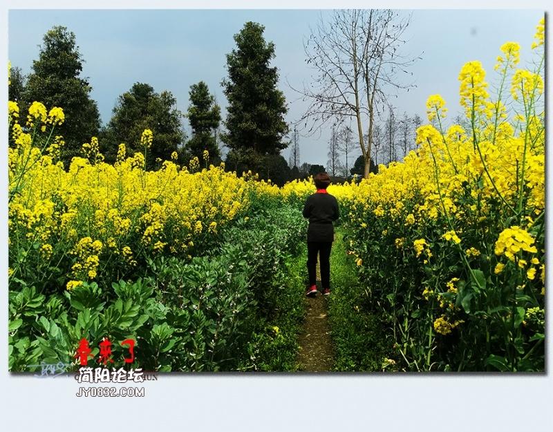 青城之春——33.jpg