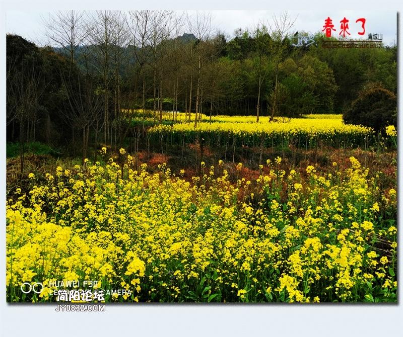 青城之春——35.jpg