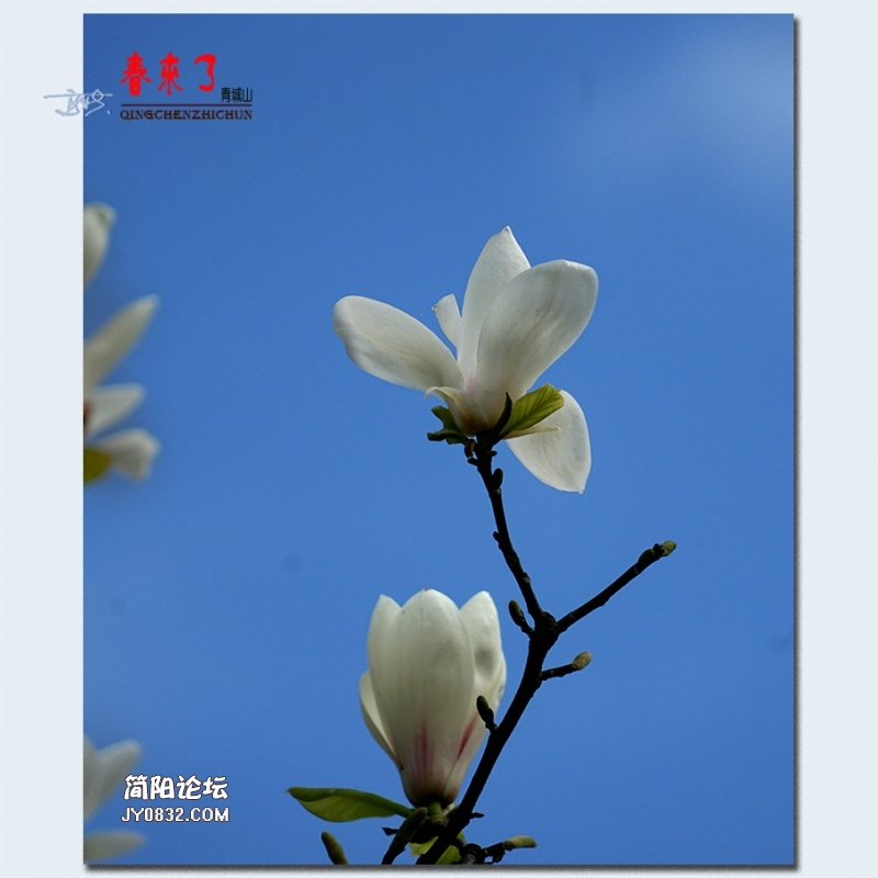 青城之春——36.jpg