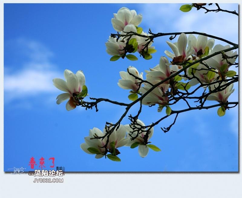 青城之春——38.jpg