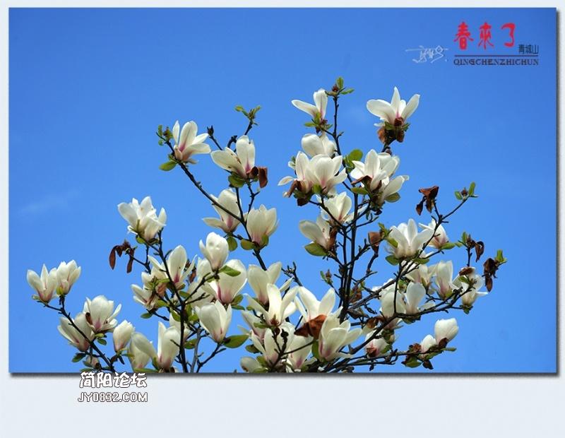 青城之春——40.jpg