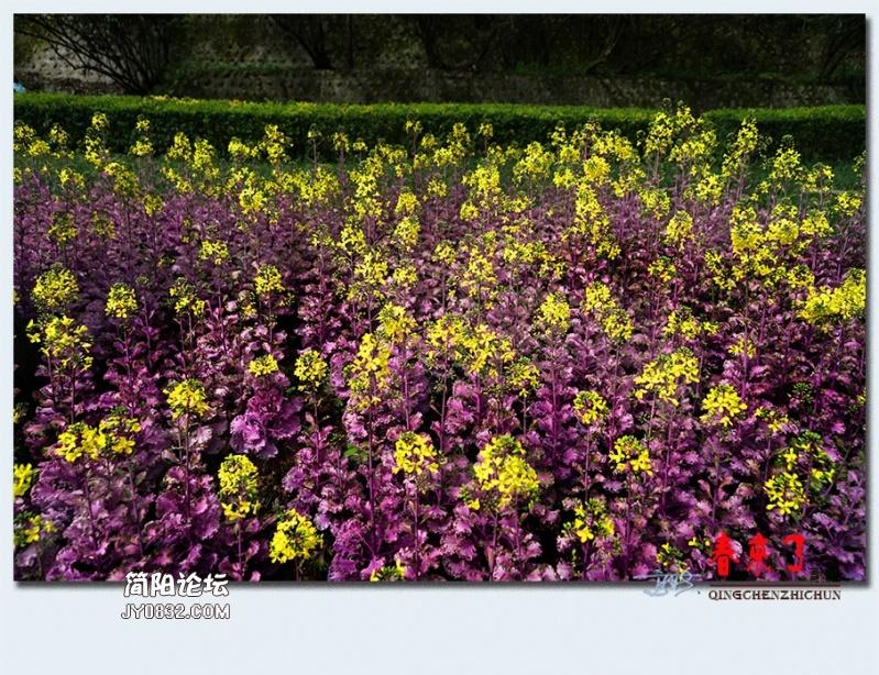 青城之春——41.jpg