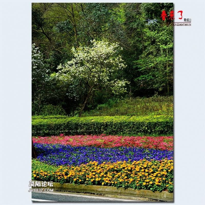 青城之春——43.jpg