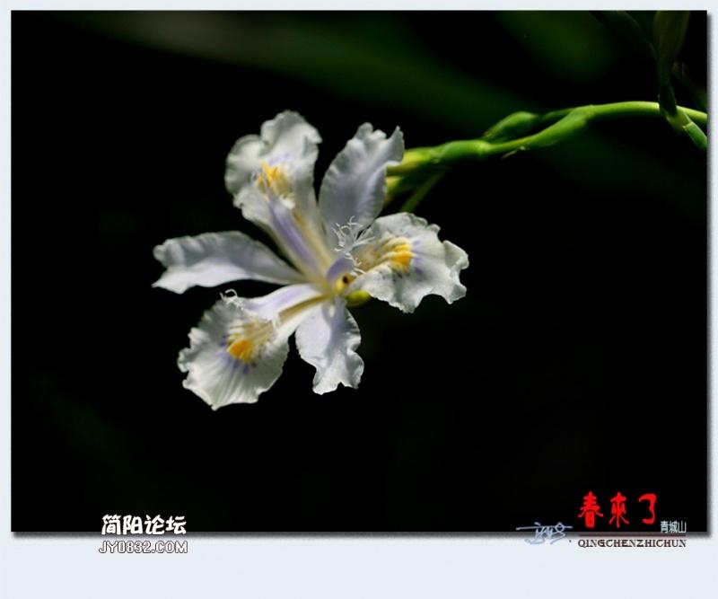 青城之春——45.jpg